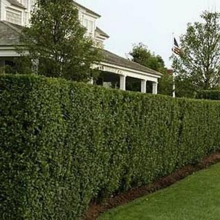 зеленый забор даче